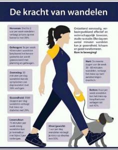 het effect van wandelen